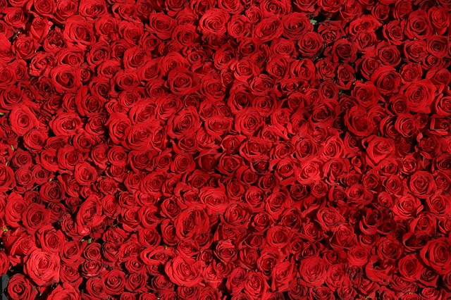 Romantično prerokovanje iz vrtnic